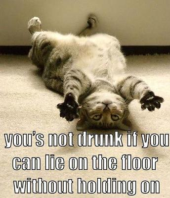 drunk cat